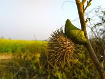för bakgrundsnärbild för gul gräsplan landskap arkivfoton