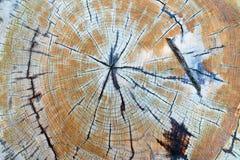 För bakgrundsträd för abstrakt grunge trästam Arkivbild