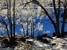 För bakgrundsvinter för djupfrysta träd blå förkylning Royaltyfri Fotografi