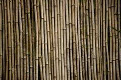för bambueps för 10 bakgrund vektor för illustration Royaltyfri Fotografi