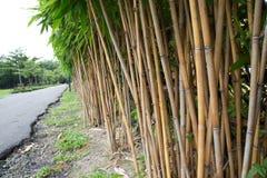 för bambueps för 10 bakgrund vektor för illustration Royaltyfria Foton