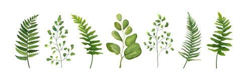 För beståndsdeluppsättning för vektor märkes- samling av den gröna skogormbunken för royaltyfri illustrationer