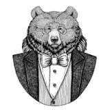 För björnHipster för grisslybjörn stor lös dragen illustration djur hand för tatueringen, emblem, emblem, logo, lapp, t-skjorta Royaltyfri Foto