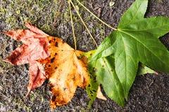 För blad` s för sött gummi ett liv arkivbilder