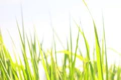 För bladbakgrund för slut övre grönt abstrakt begrepp Royaltyfria Foton