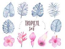 För bladblomma för vattenfärg som hand målad tropisk indigoblå uppsättning för lilja för calla för hibiskus för frangipani isoler Arkivbild
