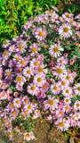 för bladblommor för bakgrund härlig trädgård royaltyfria foton