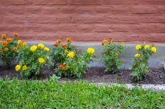 för bladblommor för bakgrund härlig trädgård Arkivfoto