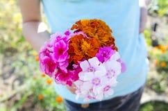för bladblommor för bakgrund härlig trädgård Arkivbilder