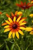 för bladblommor för bakgrund härlig trädgård Royaltyfri Fotografi