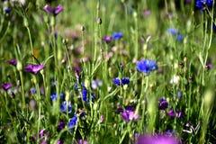 för bladblommor för bakgrund härlig trädgård Arkivbild