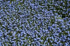 för bladblommor för bakgrund härlig trädgård Royaltyfria Bilder
