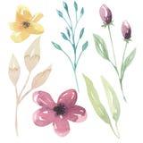 För blom- gula gräsplan för sidor för blommor beståndsdelbär för vattenfärg purpurfärgad Royaltyfri Foto