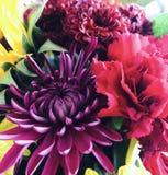 för blommabild för bukett ljus vektor Royaltyfri Fotografi