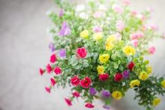 för blommabild för bukett ljus vektor Arkivbild