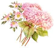 för blommabild för bukett ljus vektor Vanlig hortensia och rosa buske i blomning vattenfärg I stock illustrationer