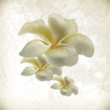 för blommagrunge för bakgrund elegant vektor stock illustrationer