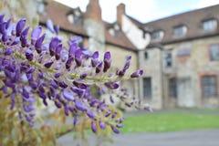 För blommahus för vår purpurfärgad bakgrund Arkivbild
