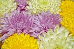 för blommaillustration för bukett blom- vektor Royaltyfri Bild