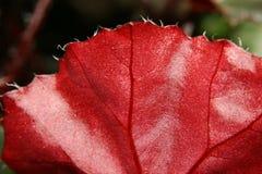 För blommaminiatyr för makro exotisk värld Royaltyfri Foto
