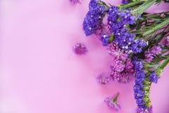 För blommaprästkrage för ny vår purpurfärgad växt och för sammansättning för staticeblommaram på purpurfärgade mjuka rosa färger arkivbilder