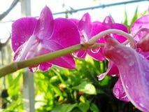 för blommaskog för bakgrund härlig lampa för illustration Royaltyfri Fotografi