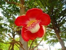 för blommaskog för bakgrund härlig lampa för illustration Arkivfoto