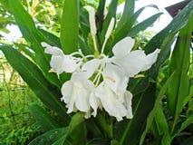 för blommaskog för bakgrund härlig lampa för illustration Arkivbild