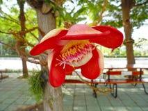 för blommaskog för bakgrund härlig lampa för illustration Royaltyfria Bilder