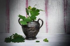 För blommatappning för Celandine blommande metall för vas Royaltyfria Bilder