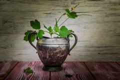 För blommatappning för Celandine blommande metall för vas Royaltyfria Foton