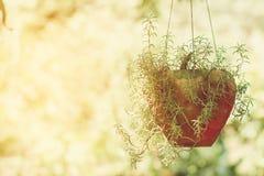 För blommaträd för gemensam Purslane som krukan hänger på naturbakgrund Royaltyfri Foto