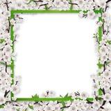 För blomningträd för ram bevuxna filialer royaltyfri illustrationer