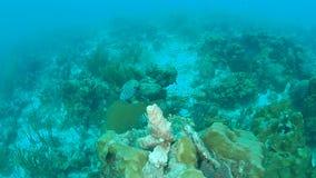 För Bonaire för karibiskt hav för korallliv undervattens- dyka video 1080P ö lager videofilmer