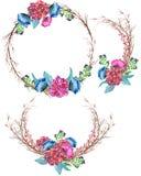 För bukettintelligens för vattenfärg romantiska fruncher och kronblad för rosor stock illustrationer