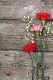 för bukettkort för bakgrund härlig trädgård för blommor för nejlikor Royaltyfri Foto