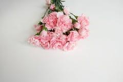 för bukettkort för bakgrund härlig trädgård för blommor för nejlikor Arkivbilder