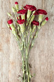 för bukettkort för bakgrund härlig trädgård för blommor för nejlikor Royaltyfria Foton