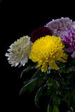 för bukettkort för bakgrund härlig trädgård för blommor för nejlikor Fotografering för Bildbyråer