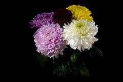 för bukettkort för bakgrund härlig trädgård för blommor för nejlikor Arkivfoton