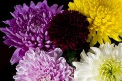 för bukettkort för bakgrund härlig trädgård för blommor för nejlikor Arkivfoto