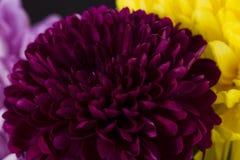 för bukettkort för bakgrund härlig trädgård för blommor för nejlikor Royaltyfri Bild