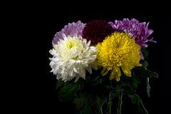 för bukettkort för bakgrund härlig trädgård för blommor för nejlikor Royaltyfria Bilder