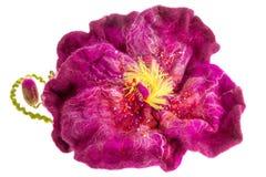 För burgundy för garnering härligt beslag blomma på huvudet Arkivbilder