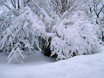 För bygdlandcsape för vinter snöig sikt Arkivfoton