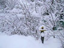 För bygdlandcsape för vinter snöig sikt Arkivbilder
