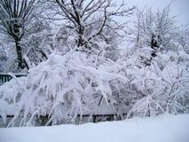 För bygdlandcsape för vinter snöig sikt Royaltyfri Bild