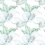 För Callablommor för sömlös vattenfärg vit modell Fotografering för Bildbyråer