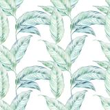 För Callablommor för sömlös vattenfärg vit modell Royaltyfria Foton