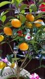 för citronreproduktion för bok botanisk tappning för tree royaltyfria bilder